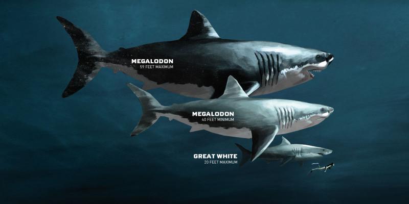 Размеры мегалодона по сравнению с Большой белой акулой и человеком