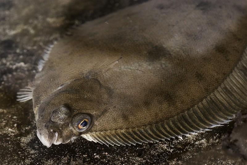 Показать картинки рыб что переживайте
